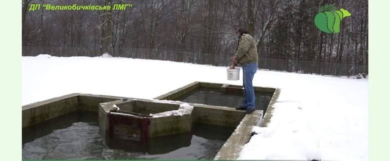 """У лісівників ДП """"Великобичківське ЛМГ"""" можна посмакувати """"благородною"""" рибою"""